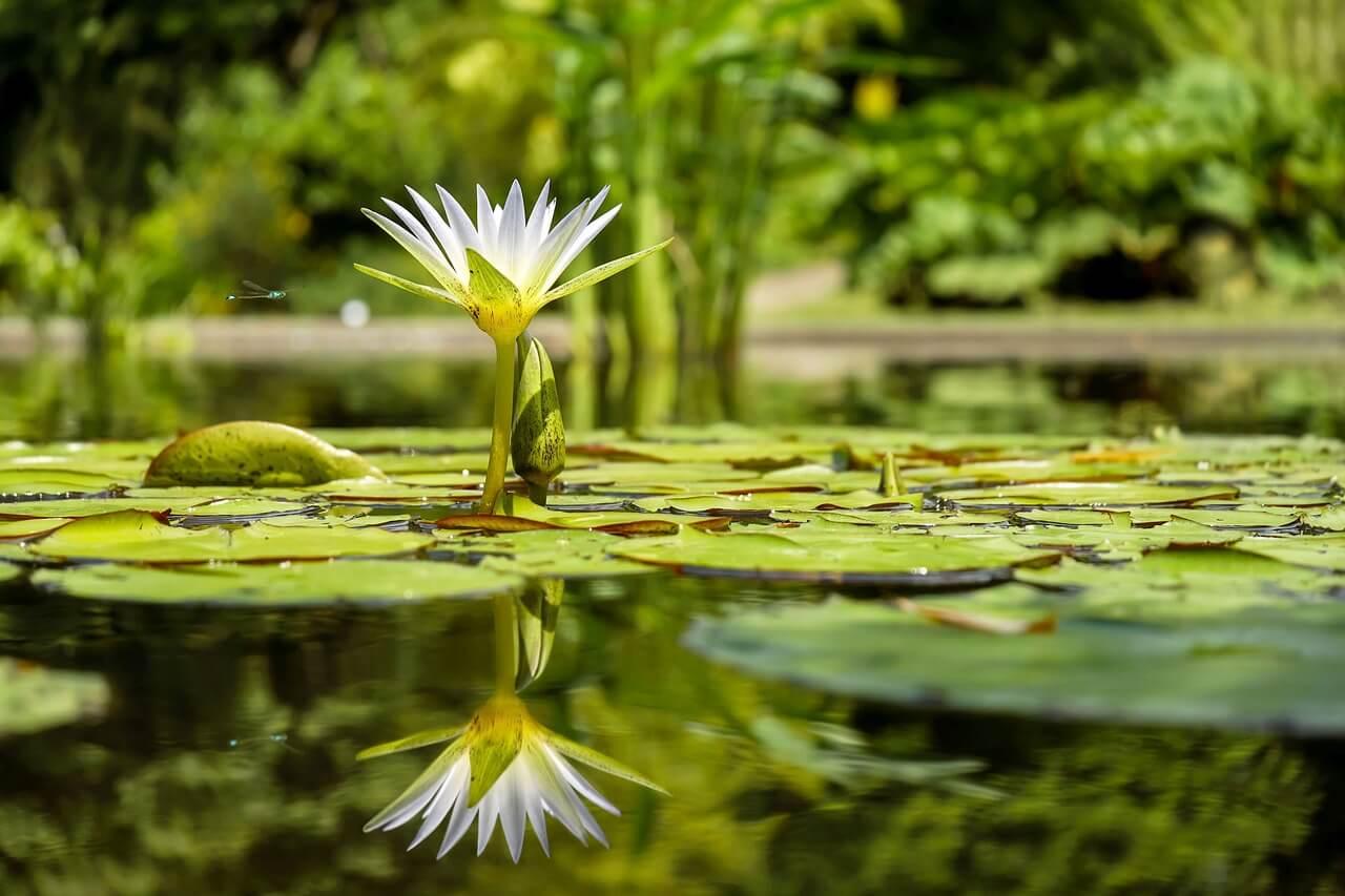 Gartenteich anlegen Teich selber bauen im Garten